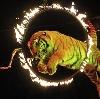 Цирки в Дивногорске